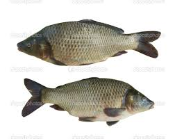 Getting Started with Small Scale Tilapia Farming