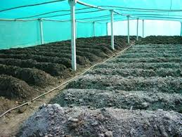 vermicompost organic fertilizer production