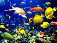 Aquarium Maintenance Business