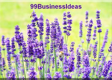 How To Start a Lavender Farm Business with Low Investment