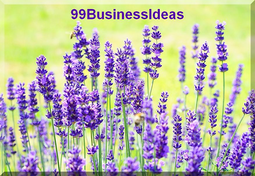 Lavender business plan