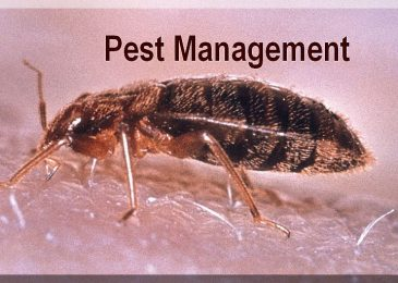 How To Start a Profitable Pest Control Business – Guide